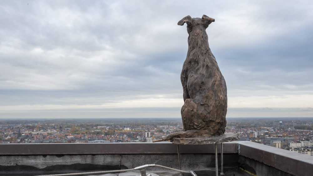 De hond op de toren